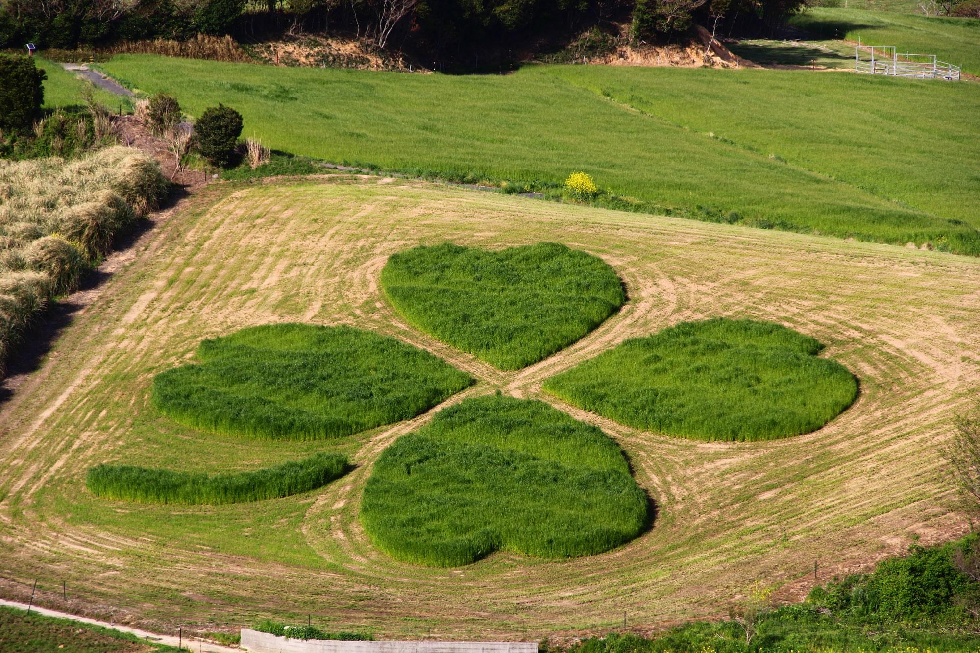 想いを込めやすい四つ葉・クローバーの形をした特別なプレゼント イメージ